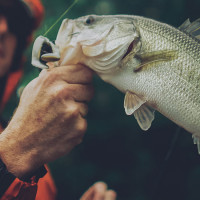 Area Fishing Guides