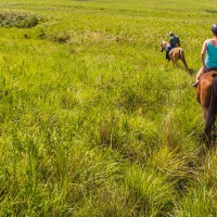 Horseback Riding Guides